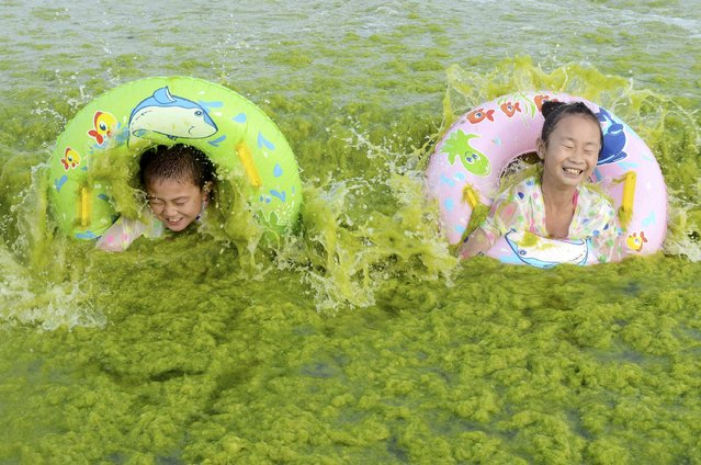 Children laugh as they swim with floats at the seashore covered by algae, in Qingdao, Shandong province, China, July 24, 2015. (Photo by Reuters/Stringer)