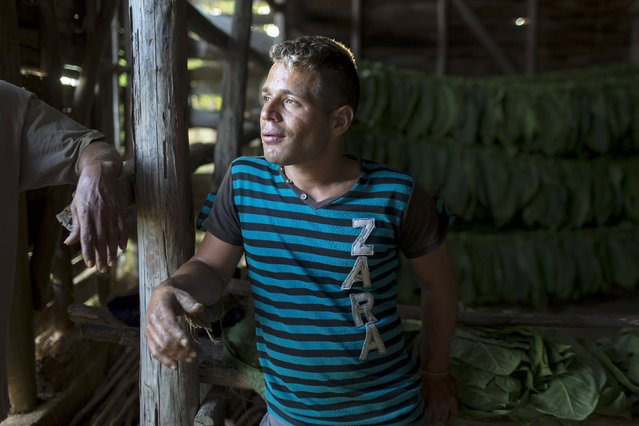 Asbel Siles, 27, who decided not to attend university, talks to relatives (not pictured) after work at his family's tobacco plantation in San Luis at Cuba's western province of Pinar del Rio, February 16, 2015. (Photo by Alexandre Meneghini/Reuters)