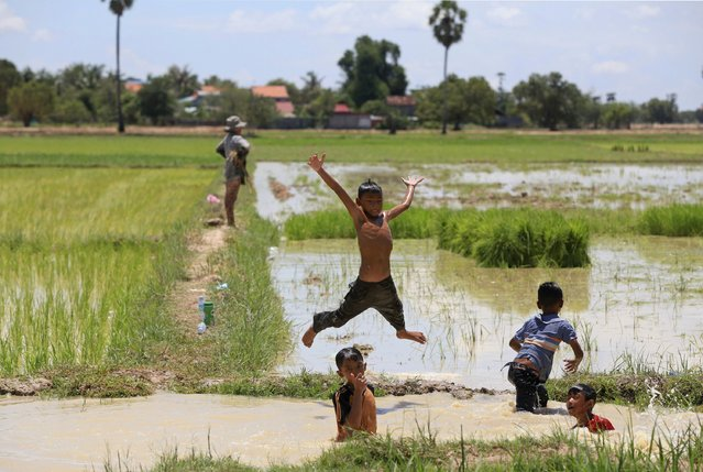 Boys play at a canal of a rice paddy field on the outskirts of Phnom Penh August 20, 2014. (Photo by Samrang Pring/Reuters)