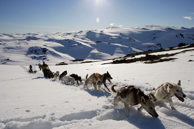 Dogs pulling sledge across snow in Norway. (Photo by Vegar Abelsnes/Getty Images)