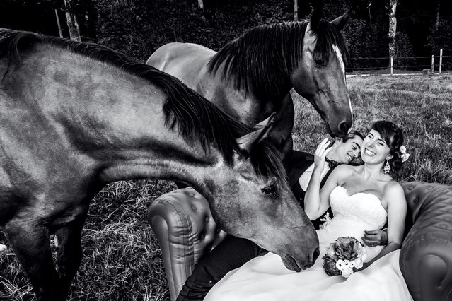 Some horses interrupt a couples photo shoot. (Photo by William Lambelet/Caters News Agency)
