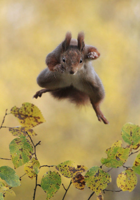 'Kung Fu squirrel'. (Photo by Julian Rad/Comedy Wildlife Photography Awards/Mercury Press)
