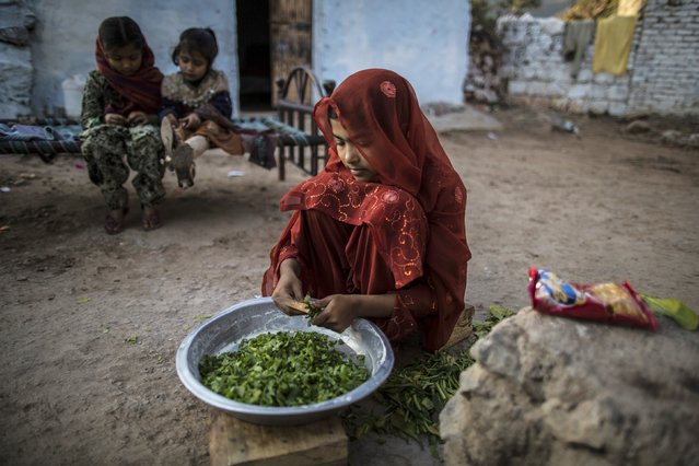 Farwa, 13, prepares vegetables at her house in Islamabad January 6, 2015. (Photo by Zohra Bensemra/Reuters)