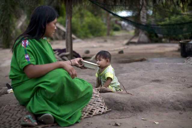 In this November 19, 2015 photo, Ester Melendez feeds banana porridge to her nine-month-old daughter Dina, in Pichiquia, an Ashaninka indigenous community in Peru's Junin region. Incursions and assaults by loggers, miners, colonists and leftist guerrillas have reduced the lands of the Ashaninka people in the Peruvian Amazon, leaving many of the 97,000 members of the group malnourished, despite efforts by the government and independent organizations to help. (Photo by Rodrigo Abd/AP Photo)