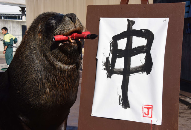"""Eleven year-old male sea lion Jay paints the character for """"monkey"""" in calligraphy as part of a New Year's Day attraction at Hakkeijima Sea Paradise aquarium park in Yokohama, a suburb of Tokyo, on December 30, 2015. The show is being held twice a day in January. (Photo by Toru Yamanaka/AFP Photo)"""