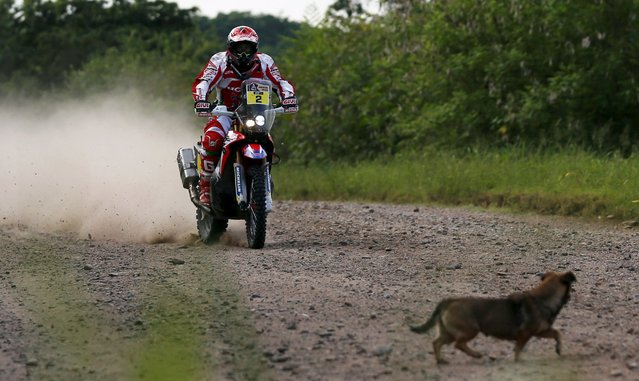 A dog crosses the road as Paulo Goncalves of Portugal rides his Honda motorcycle during Termas de Rio Hondo-Jujuy third stage in the Dakar Rally 2016 in Tucuman province, Argentina, January 5, 2016. (Photo by Marcos Brindicci/Reuters)