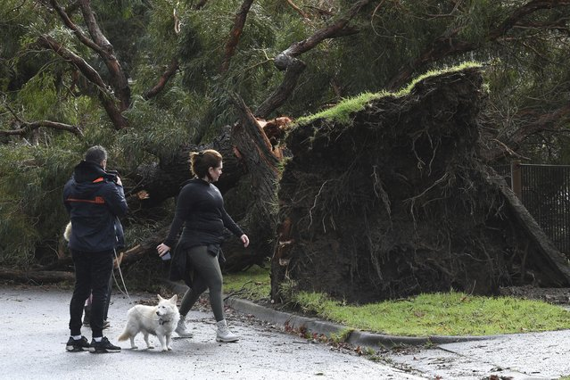 Residents look at a downed tree following storm damage in Lilydale, Melbourne, Australia, Thursday, June 10, 2021. Wild weather has toppled trees which have trapped people in cars and homes in Australia's southeast. More than 200,000 homes have been left without power as many brace for flooding (Photo by James Ross/AAP Image via AP Photo)