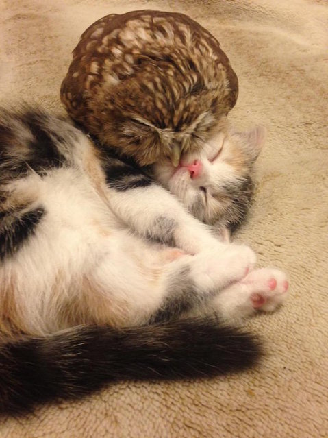 Kitten And Owl Are Best Friends