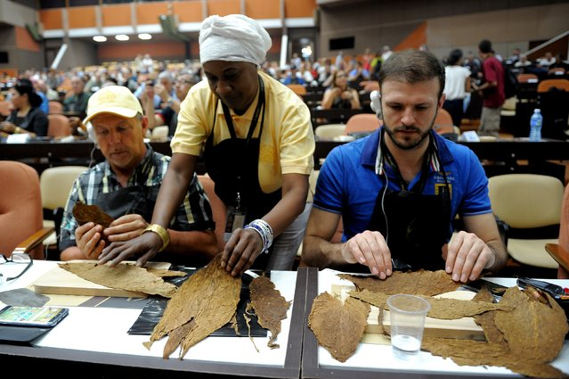 A cigar roller (C) teaches participants in a handmade cigar rolling master class at the Convention Palace during the XIX Havana Cigar Festival, in Havana, on March 1, 2017. (Photo by Yamil Lage/AFP Photo)