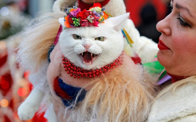 A cat dressed in a traditional outfit takes part during the Orthodox Christmas celebration in Kiev, Ukraine on January 7, 2020. Orthodox Christians celebrate Christmas Day on December 25 of the older Julian calendar, which currently corresponds to January 7 in the Gregorian calendar. (Photo by Pavlo Gonchar/SOPA Images/LightRocket via Getty Images)