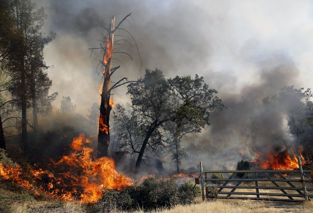 Flames from the Jerusalem Fire erupt in Lake County, California August 12, 2015. (Photo by Robert Galbraith/Reuters)