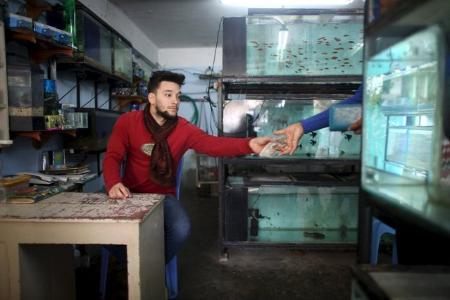 Mechanic Antonio Sanchez, 22, works at his family's fish shop in Havana, February 19, 2015. (Photo by Alexandre Meneghini/Reuters)