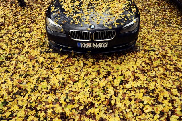 Fallen leaves cover a BMW car during a rainy autumn day in Belgrade, Serbia November 3, 2016. (Photo by Marko Djurica/Reuters)