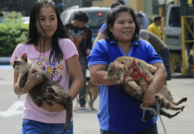 People carry their pets before the start of a pet blessing at Greenhills shopping mall in Manila October 3, 2015. (Photo by Romeo Ranoco/Reuters)