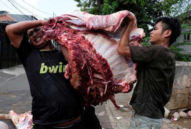 Youths hold meat that will be distributed to poor people during the Muslim holiday of Eid Al-Adha outside a mosque at Pasar Senin in Jakarta, Indonesia, September 12, 2016. (Photo by Reuters/Beawiharta)