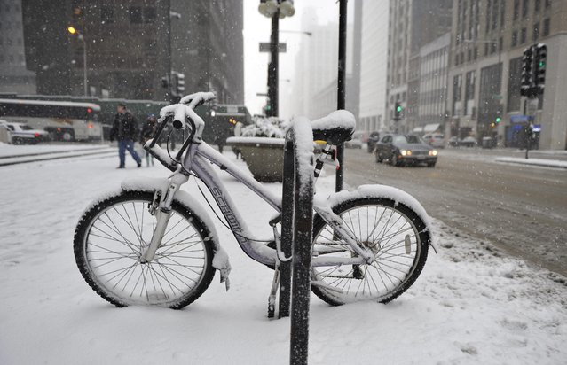 A bicycle is covered in snow on March 5, 2013 in Chicago, Illinois. The worst winter storm of the season is expected to dump 7-10 inches of snow on the Chicago area with the worst expected for the evening commute. (Photo by Brian Kersey/AFP Photo)