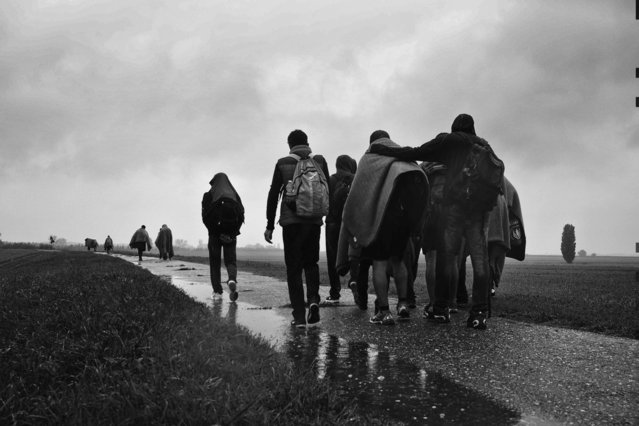 """Hungary-Serbian border the refugess form Iraq try to cross the border in the illegal way. After 30 km walking, the group failed to cross the border, so they had to return to Serbia, saying goddbye with the words """"Do you come with us? You are lucky, you can choose, you can do what you want, you are free"""". (Photo by Andreja Restek)"""