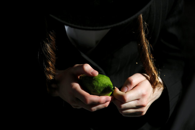 An ultra-Orthodox Jewish man inspects an etrog, citrus fruit used in rituals during the upcoming Jewish holiday of Sukkot in Jerusalem's Mea Shearim neighbourhood, October 13, 2016. (Photo by Amir Cohen/Reuters)
