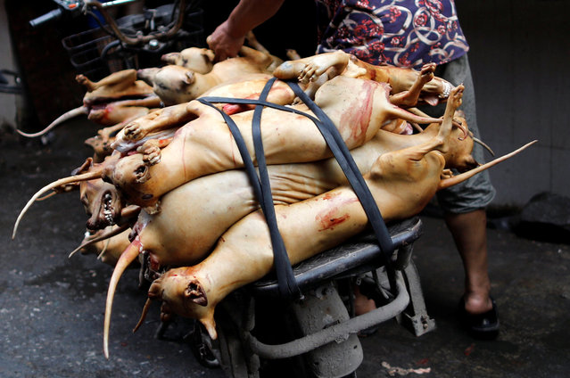 Butchered dogs are transported to a vendor's stall at a market during the local dog meat festival in Yulin, Guangxi Zhuang Autonomous Region, China on June 21, 2018. (Photo by Tyrone Siu/Reuters)