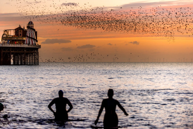 People watching the nightly starling murmuration at Brighton's Palace Pier before the birds roost for the night, on January 8, 2019 in Brighton, England. (Photo by Andrew Hasson/Getty Images)