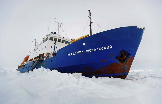 The Russian ship MV Akademik Shokalskiy is trapped in thick Antarctic ice 1,500 nautical miles south of Hobart, Australia, on December 27, 2013. The research ship, with 74 scientists, tourists and crew on board, was on a research expedition to Antarctica when it got stuck Tuesday after a blizzard's whipping winds pushed the sea ice around the ship, freezing it in place. (Photo by Andrew Peacock/Australasian Antarctic Expedition/Footloose Fotography)