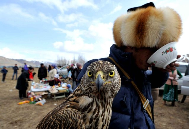 "A Kyrgyz berkutchi (eagle hunter) holds his bird, a golden eagle, during the hunting festival ""Salburun"" in the village of Alysh, near Naryn, 350 km outside Bishkek, Kyrgyzstan on March 13, 2016. (Photo by Vyacheslav Oseledko/AFP Photo)"