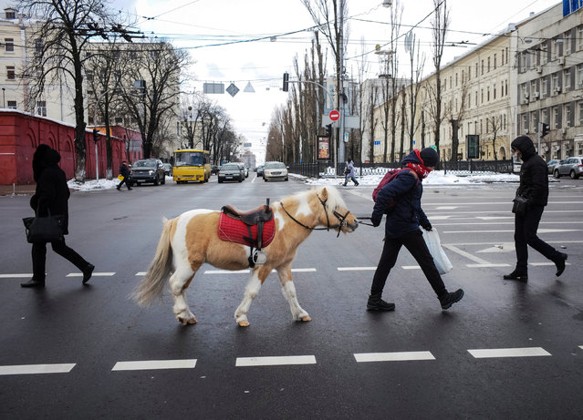 A man with a pony walks on a pedestrian crossing in central Kiev, Ukraine January 3, 2019. (Photo by Gleb Garanich/Reuters)
