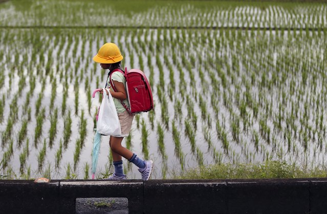 An elementary school student walks past next to a rice paddy field in Kazo, north of Tokyo July 1, 2015. (Photo by Issei Kato/Reuters)