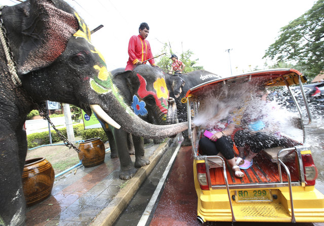 With assist from its mahouts, elephants blow water from its trunk to tourists on motor-tricycle or Tuk Tuk, ahead of the Buddhist New Year, known here as Songkran,  in Ayutthaya province, central Thailand Tuesday, April 11, 2017. The three-day new year festival will start on April 13. (Photo by Sakchai Lalit/AP Photo)