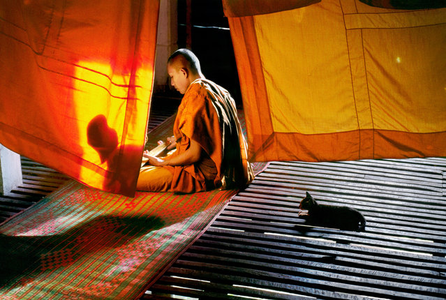 """Monk and Cat, Aranyaprathet, Thailand, 1998. """"I photographed this novice monk studying Buddhist writings in the late afternoon at a monastery in Aranyaprathet, near the Thai border with Cambodia. I watched the changing light as the monks went about both the mundane and sacred duties of their day. With the simple use of wood and fabric, of shades of saffron from mustard gold to deep orange, their environment was serene"""". (Photo by Steve McCurry/The Guardian)"""