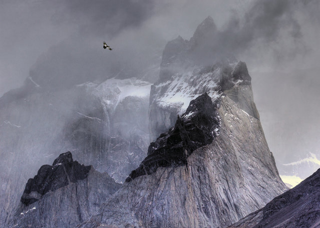 Andean condor in flight over mountain peaks by Ben Hall, UK. Gold award winner in the birds in the environment category. An Andean condor (Vultur gryphus) circles the thermals looking for prey in its dramatic habitat of Torres del Paine national park, Chile. (Photo by Ben Hall/2017 Bird Photographer of the Year Awards)