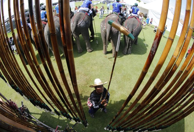 A Thai mahout with a polo mallet as elephants carrying their mahouts and riders prepare for competition on first day's play at the King's Cup Elephant Polo Tournament 2014 held near Bangkok, in Samut Prakan province, Thailand, 28 August 2014. (Photo by Barbara Walton/EPA)
