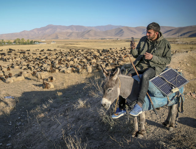 Stockbreeders herd sheep at the highlands of Van, Turkey on October 6, 2017. Every year, stockbreeders return their homes after going up high altitudes to try to find better grassland for their animals. Stockbreeders stop over with their horses and donkeys at the determinated points as they try to find water on barren lands on the way back home. The large part of stockbreeders' voyage, from Van to Batman, could be up to 45 days. (Photo by Ozkan Bilgin/Anadolu Agency/Getty Images)