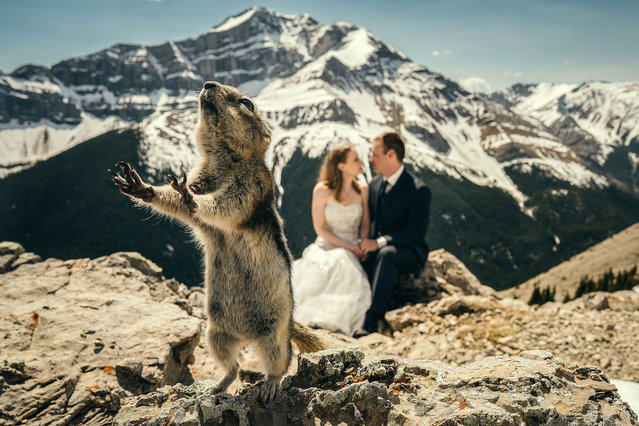A rodent ruins a couples photoshoot. (Photo by Marcin Karpowicz/Caters News Agency)