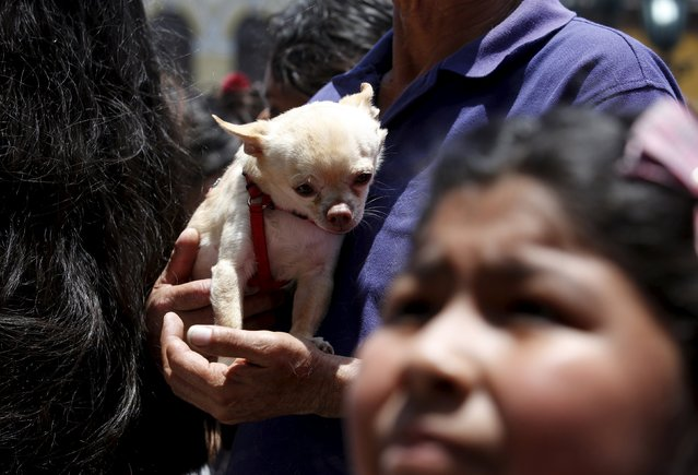 Owners hold their pets as they wait for blessings outside the San Francisco church in Lima, October 4, 2015. (Photo by Mariana Bazo/Reuters)