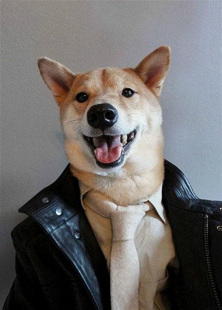 Menswear Dog By  David Fung