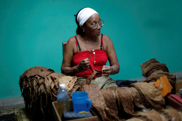 A woman works at the H. Upmann cigar factory during the XX Habanos Festival in Havana, Cuba on March 1, 2018. (Photo by Reuters/Stringer)