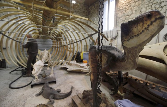 Emmanuel Janssens Casteels, a Belgian animal sculptor, looks at a replica of a whale skeleton as he works in his workshop in Prayssas December 3, 2014. (Photo by Regis Duvignau/Reuters)