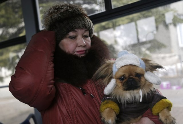 A woman holds her dog while waiting on a bus to leave the town of Debaltseve, Ukraine, Friday, February 6, 2015. (Photo by Petr David Josek/AP Photo)