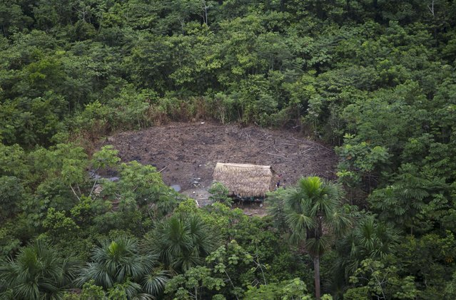 This March 16, 2015 photo shows a camp recently built by illegal loggers in an area of the jungle where dozens of Ashaninka Indian hamlets are located in the department of Ucayali, Peru. This is how illegal loggers begin, by setting up a base camp and cutting down trees in a radius around the structure. The felled trees are dragged to the nearby Putaya River. (Photo by Martin Mejia/AP Photo)
