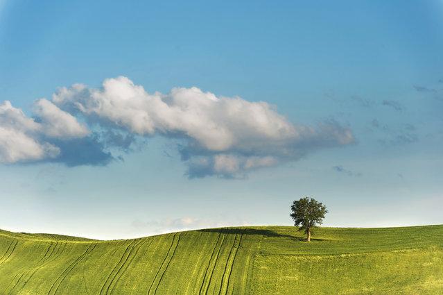 """""""L'ombra dell'albero"""". (Photo and caption by Massimo Feliziani)"""