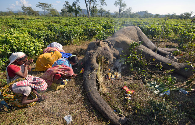 Women pray next to the carcass of a male elephant, who according to forest officials succumbed to injuries after a fight with another elephant Monday night, at a tea garden in Nagaon district in the northeastern state of Assam, India, December 4, 2018. (Photo by Anuwar Hazarika/Reuters)