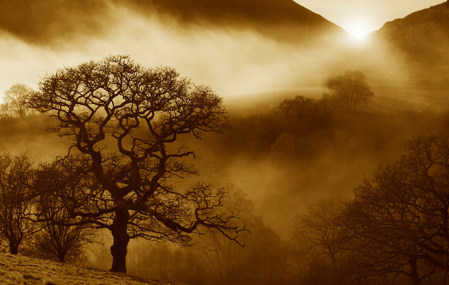 """Oak Sunrise"" by professional photographer Alan Price has won the International Garden Photographer of the Year, ""Celebrating Our Oaks"" competition, run in partnership with Action Oak. Action Oak is a campaign to protect the UK's oak trees from threats including pests and diseases. (Photo by Alan Price/IGOTY)"