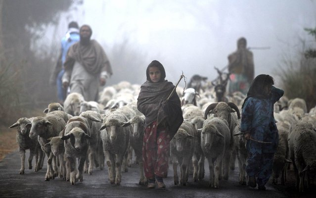 Young Indian Gujjar nomads walk with their flock through thick fog on the outskirts of Jammu on December 19, 2013. Northern India continues to face below average temperatures with dense fog affecting flights and trains. (Photo by AFP Photo/STR)