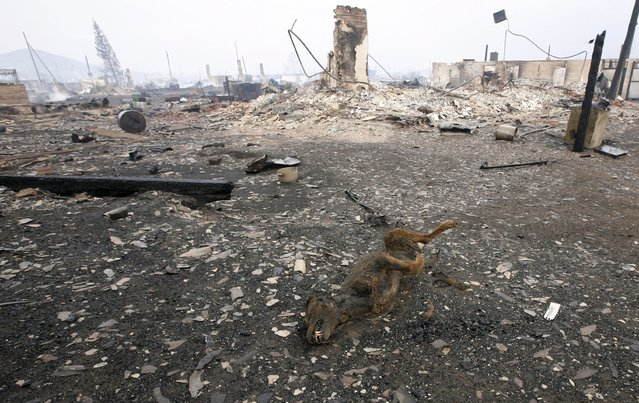 The carcass of a dog is seen near the debris of destroyed buildings in the settlement of Shyra, damaged by recent wildfires, in Khakassia region, April 13, 2015. (Photo by Ilya Naymushin/Reuters)
