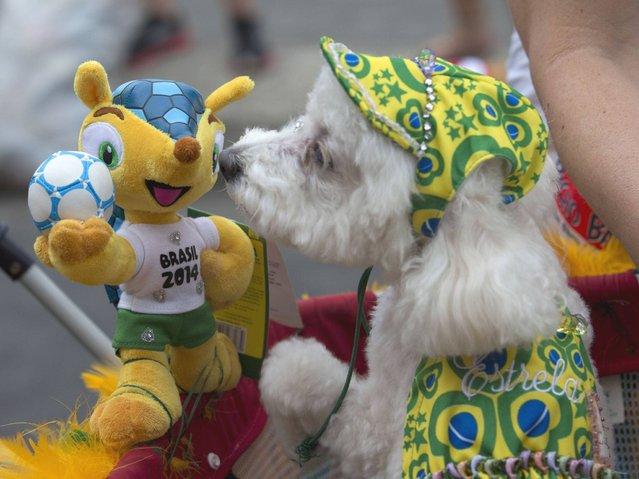 "A dog sniffs at ""Fuleco"", the official mascot of the 2014 FIFA World Cup, during the ""Blocao"" dog carnival in Rio de Janeiro. (Photo by Silvia Izquierdo/AP Photo)"