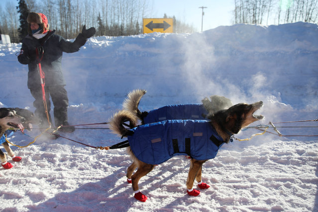 A team waits at the gate of the official restart of the Iditarod, a nearly 1,000 mile (1,610 km) sled dog race across the Alaskan wilderness, in Fairbanks, Alaska, U.S. March 6, 2017. (Photo by Nathaniel Wilder/Reuters)