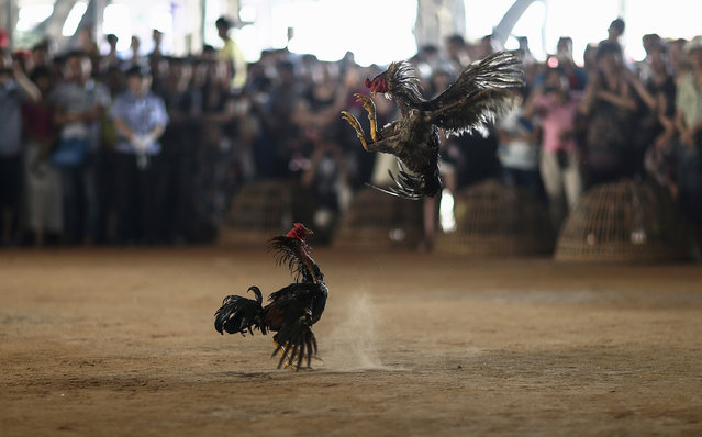 People watch roosters fight during a celebration for the New Year of the Dai minority in Xishuangbanna, Yunnan province April 13, 2014. Sunday marked the beginning of the 1,376th New Year, according to the ethnic Dai minority calendar. (Photo by Wong Campion/Reuters)