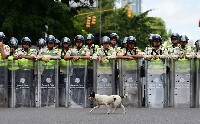 Riot police stop students of the public Central University of Venezuela during a demonstration in demand of the referendum on removing President Nicolas Maduro in Caracas on June 09, 2016. (Photo by Ronaldo Schemidt/AFP Photo)