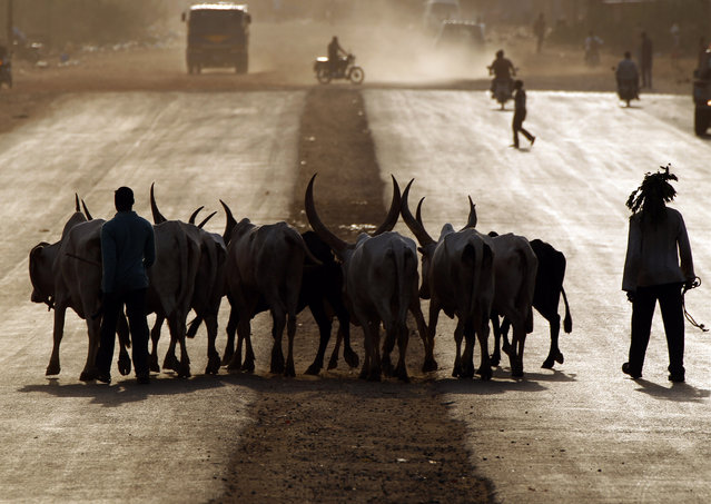 Southern Sudanese men cross a street with cattle during sunset in Juba, Sudan January 10, 2011. (Photo by Goran Tomasevic/Reuters)
